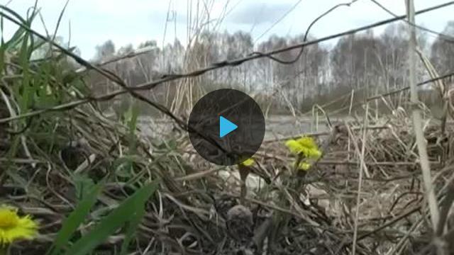 места ловли леща на канале им. москвы